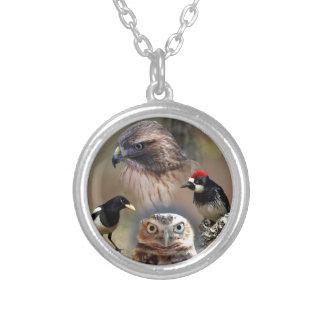 Collage del vigilante de pájaro