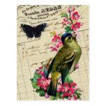 Collage elegante francés del pájaro de la primaver tarjetas postales