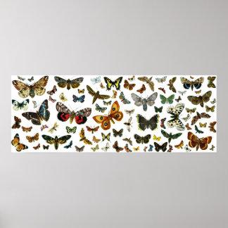 Collage europeo de la mariposa póster