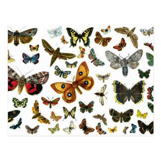 Collage europeo de la mariposa postal
