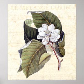 Collage hermoso de la antigüedad del flor de la ma póster