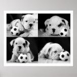 """""""Collage inglés del dogo de los perritos del fútbo Poster"""