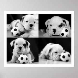 Collage inglés del dogo de los perritos del fútbo poster