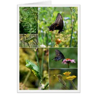 Collage negro del ciclo vital de la mariposa de tarjeta de felicitación