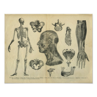 Collage of Anatomical Illustrations of the Body Posters