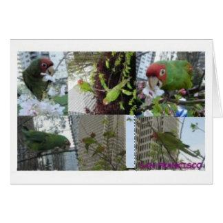 Collage salvaje de los loros felicitacion