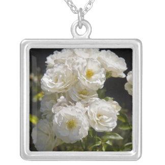 Collar 2 del rosa blanco