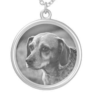 Collar adaptable de la foto del perro
