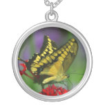 collar amarillo de la mariposa