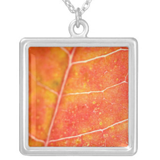 Collar anaranjado de la hoja de arce del otoño