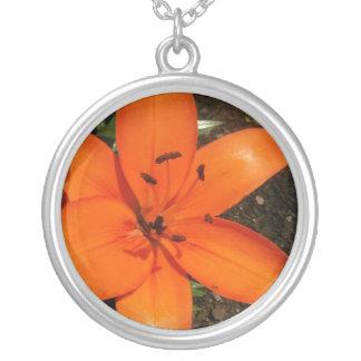 Collar anaranjado de los lirios