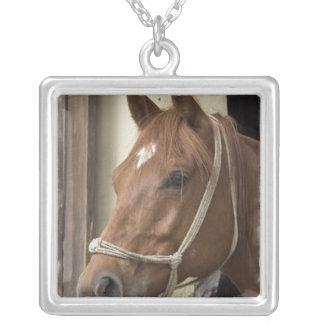 Collar árabe de los caballos