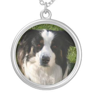 Collar australiano de la foto del perro de pastor