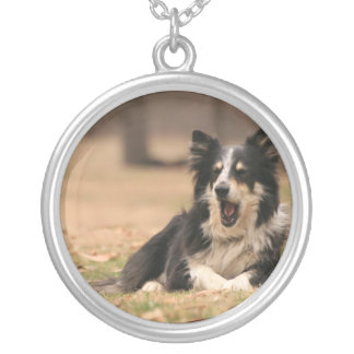 Collar australiano de la plata del perro de pastor