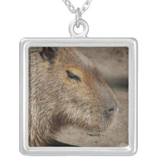 Collar australiano del Capybara