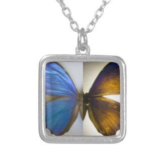 Collar azul de la mariposa de Morpho
