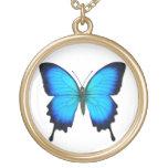Collar azul de la mariposa de Papilio Ulises
