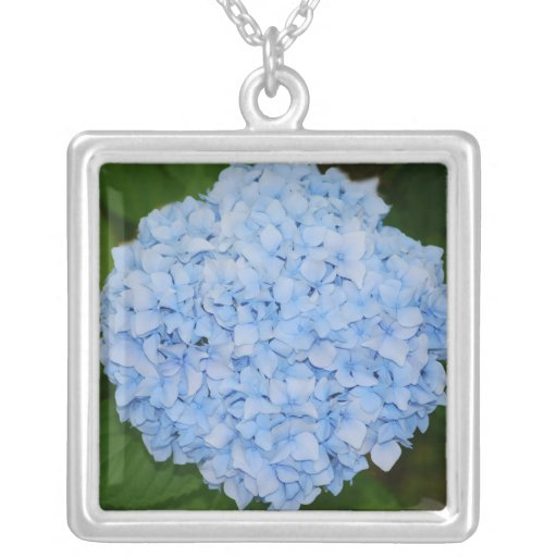 Collar azul del Hydrangea