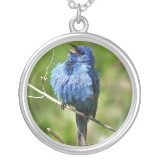 Collar azul del pájaro