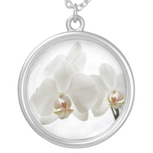 Collar blanco de la orquídea