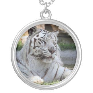 Collar blanco del tigre