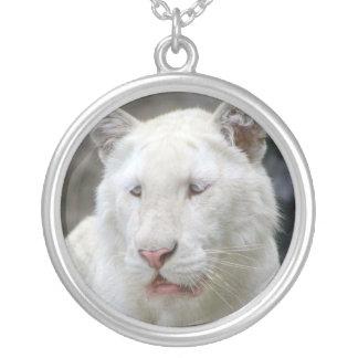 Collar blanco raro del tigre
