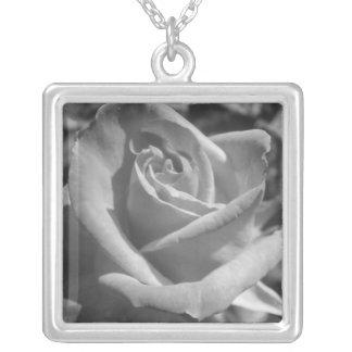 Collar color de rosa blanco y negro
