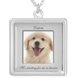 Collar conmemorativo de la foto del mascota