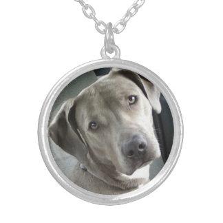 Collar conmemorativo de la foto del mascota de enc