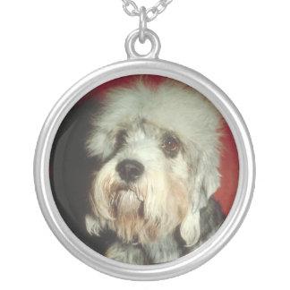 Collar de Dandie Dinmont Terrier