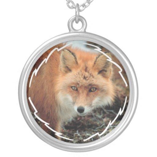 Collar de la especie del Fox