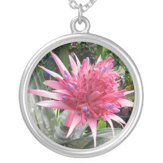 Collar de la flor de Bromeliad