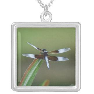 Collar de la libélula