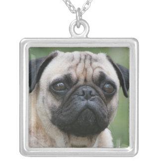 Collar de la plata esterlina del perro de perrito