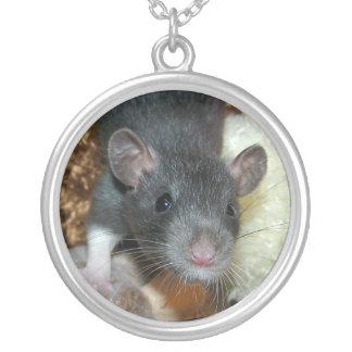 Collar de la rata