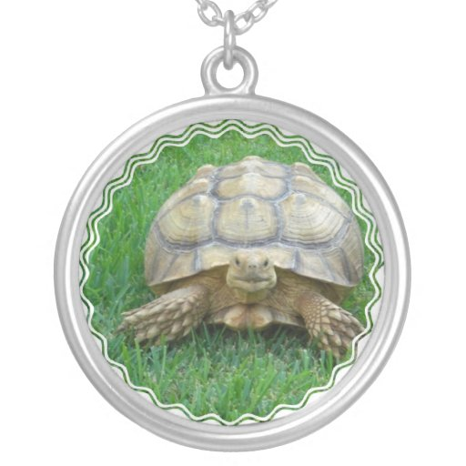 Collar de la tortuga