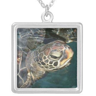 Collar de la tortuga de la natación