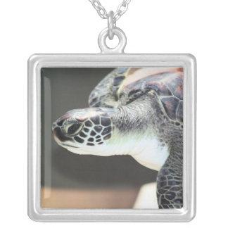 Collar de la tortuga de mar del bebé