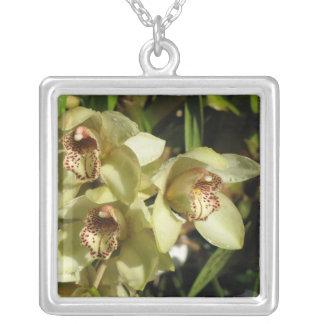 Collar de las orquídeas del Cymbidium