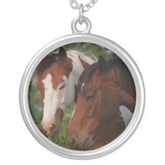 Collar de los amigos del caballo