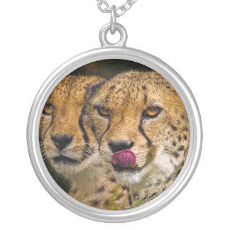 Collar de los leopardos