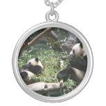 Collar de los osos de panda