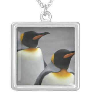 Collar de los pingüinos que marcha