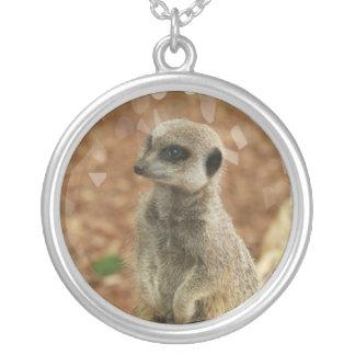 Collar de Meerkat