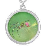Collar de oro de la araña del tejedor del orbe