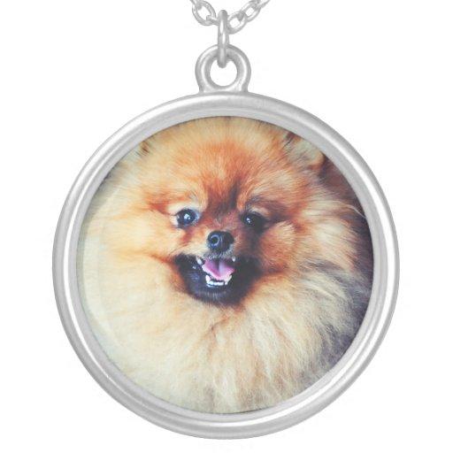Collar de Pomeranian