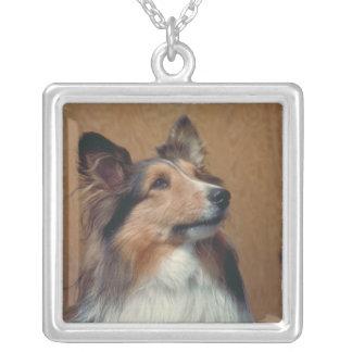 Collar de Sheltie del perro pastor de Shetland