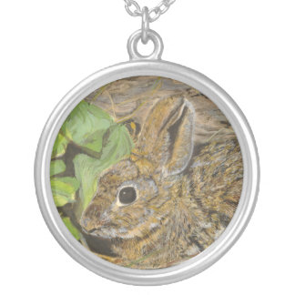 Collar del conejo del pantano