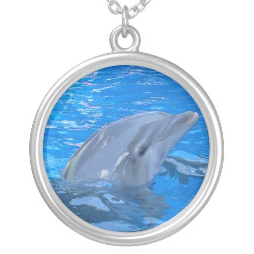 Collar del delfín de Bottlenose