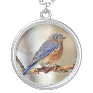 Collar del este del Bluebird